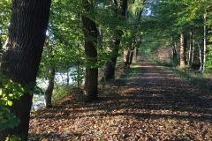 Berumerfehner Wald - Kanalpfad