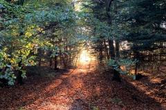 Berumerfehner Wald
